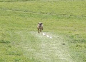 Ozzy Lure